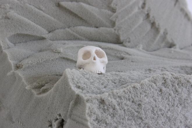 Les crânes 1